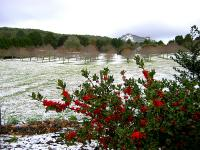 Cold Outbreak - Mt Macedon Snow - 17th July 2004 - Jane ONeill